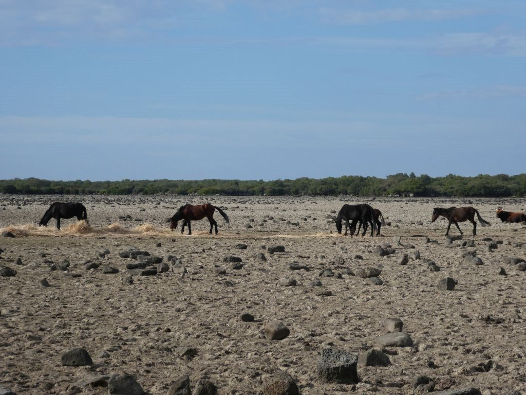 Heisse Quellen und wilde Pferde
